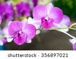 beautiful thai orchid flower...   Shutterstock . vector #356897021