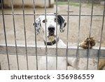 Abandoned Dog And Caged Animal...