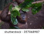 orangutan preventive from... | Shutterstock . vector #357068987