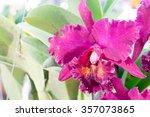beautiful thai orchid flower...   Shutterstock . vector #357073865