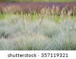 Decorative Dry Feather Grass I...