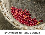 many red coffee cherries in a... | Shutterstock . vector #357160835