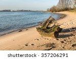 Tree Stump Washed Ashore On Th...