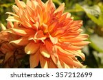 orange dahlia. | Shutterstock . vector #357212699