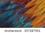Colorful Feathers  Chicken...
