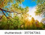 Sun Shining Through Canopy Of...