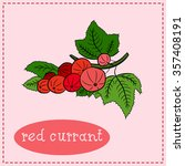 red currant vector   Shutterstock .eps vector #357408191