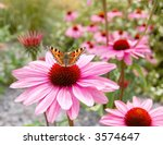 Bright Echinacea Flower With...