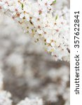 spring bloom   tree with white...   Shutterstock . vector #357622841