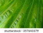 line patterns of leaf | Shutterstock . vector #357643379