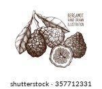 ink hand drawn bergamot... | Shutterstock .eps vector #357712331