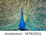 Portrait Of Beautiful Peacock...