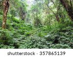 tropical forest the forests are ... | Shutterstock . vector #357865139