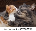 Stock photo mother cat kitten kisses cat hugs kitten and presses his face to the kitten cat tightly holding 357885791