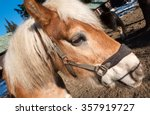 brown horse | Shutterstock . vector #357919727