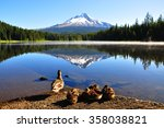 Ducks' Family At Trillium Lake...
