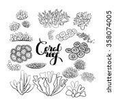 Collection Of  Ocean Plants An...