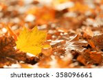 colourful autumn leaves on the... | Shutterstock . vector #358096661