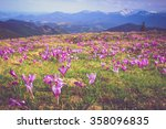field of first blooming spring... | Shutterstock . vector #358096835