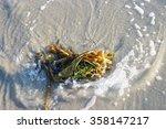 Sea Kelp Meets Wave