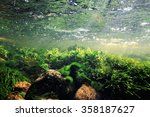 Underwater Scenery  Algae ...