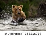 grizzly bear | Shutterstock . vector #358216799