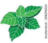 vector fresh mint leaves on a... | Shutterstock .eps vector #358296014
