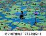 Water Birds  Birds Animal