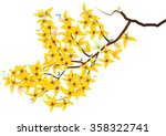 Forsythia  Weeping  Yellow...