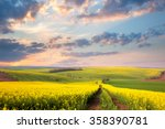 Yellow Flowering Fields  Groun...
