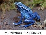 blue poison dart frog ...   Shutterstock . vector #358436891