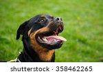 head shot of rottweiler with...   Shutterstock . vector #358462265