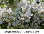 apple flowers | Shutterstock . vector #358487195
