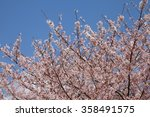cherry blossom in kyoto  japan. ... | Shutterstock . vector #358491575