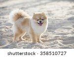 Pomeranian Dog On The White...
