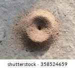 Ant Nest In Nature Environment...