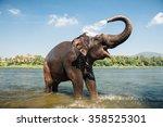 Elephant Bathing On Southern...