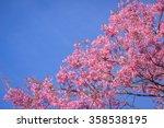 Wild Himalayan Cherry   Sakura...