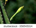 green cactus. succulent. macro...   Shutterstock . vector #358545314