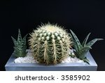 Small photo of Spiky Acharagma Cactus with Aloe Vera Plants in Metallic Pot