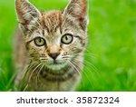 Stock photo kitten 35872324