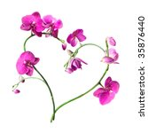 heart from pink orchids... | Shutterstock . vector #35876440