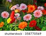 gerbera daisy | Shutterstock . vector #358770569