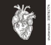vintage engraved human heart.... | Shutterstock .eps vector #358781774