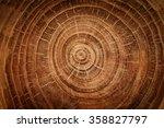 Stump Of Oak Tree Felled  ...
