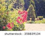 pink rose  in the summer...   Shutterstock . vector #358839134