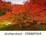Seattle Japanese Garden   Mapl...