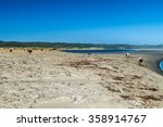 cows eat a sea weed on a beach... | Shutterstock . vector #358914767