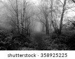 mystical forest. | Shutterstock . vector #358925225