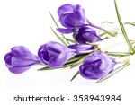 Some Spring Flowers Of Violet...